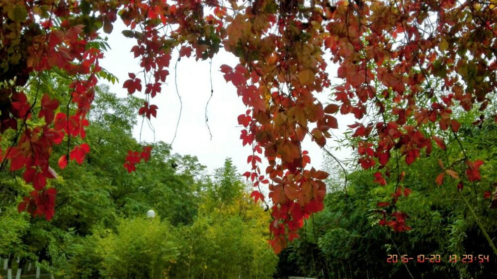 秋之韵 奥森公园掠影