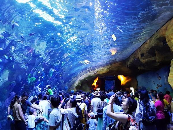 珠海长隆,玩转奇妙的海洋王国!