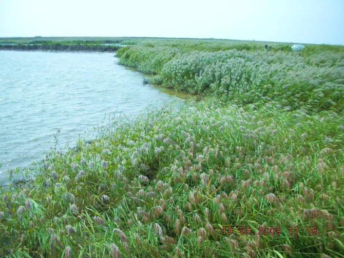 现在才知道盘锦不仅仅是丹顶鹤的故乡,还是石油,湿地,中华绒蟹,红