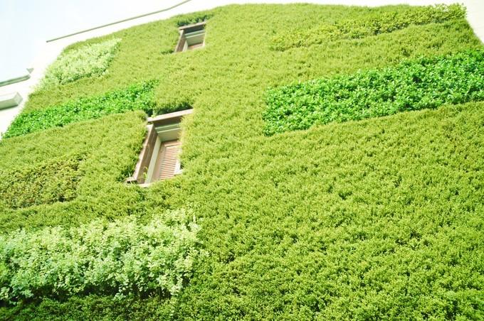 绿植文艺手绘背景