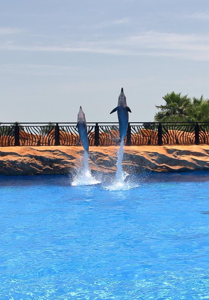 与海豚同游!珠海长隆横琴湾酒店亲子游