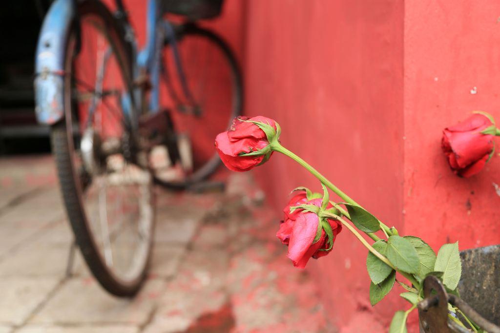 一家门铺前的铁皮垃圾桶里扔了几枝快枯萎的红玫瑰