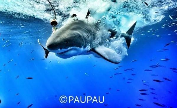 壁纸 动物 海底 海底世界 海洋动物 海洋馆 水族馆 桌面 600_368