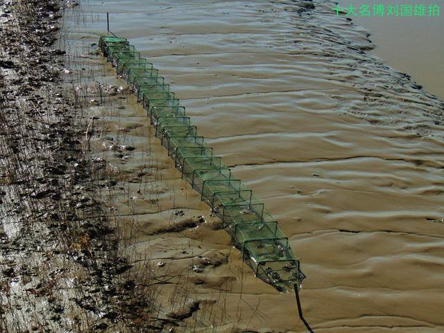 观海鸟钓螃蟹,万亩红海滩很耀眼---北方三省游(20)