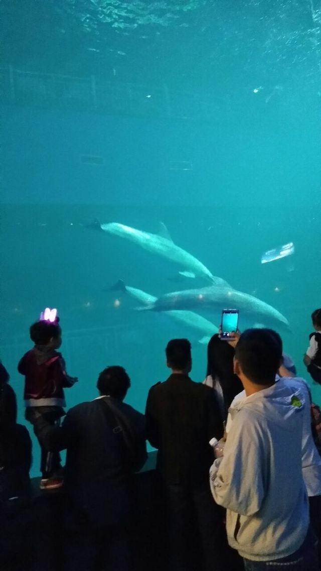 曲江公园海洋海洋好玩,曲江公园极地极地景高铁全攻略逃离图片