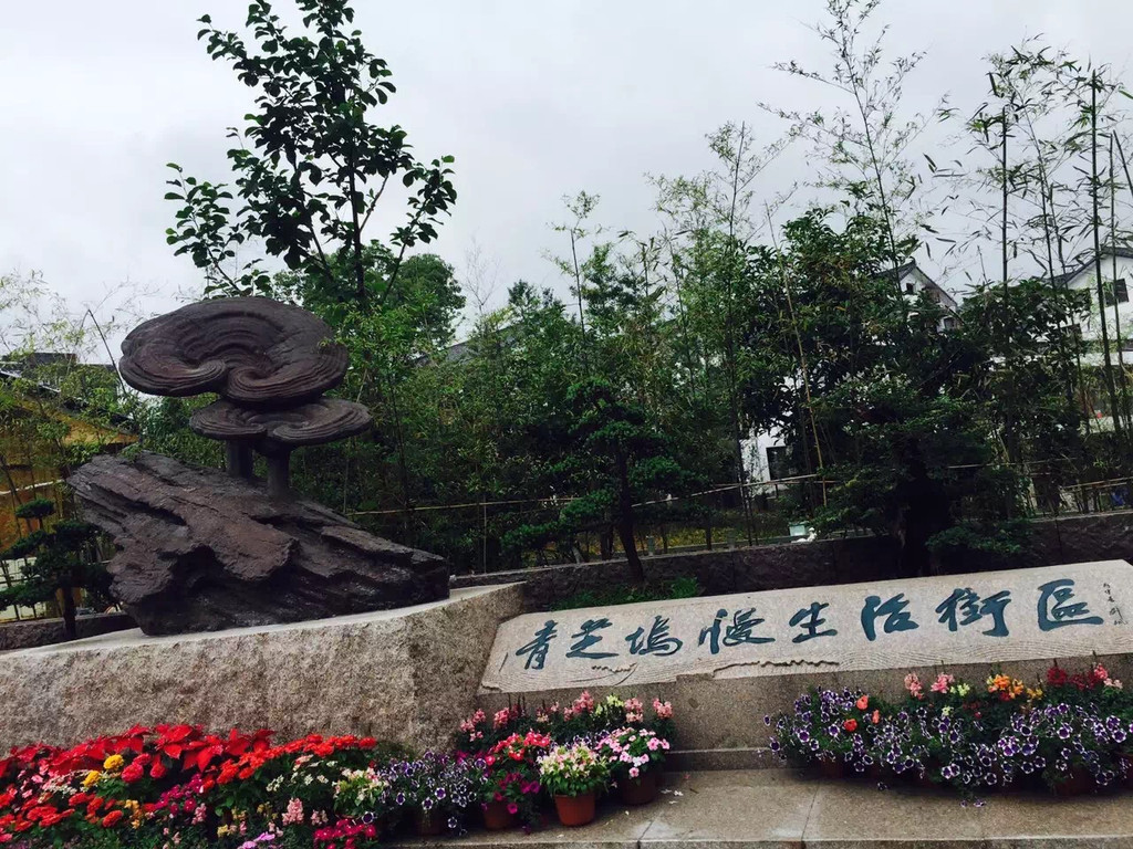 入口处,是青芝坞标志性的景观--青柳塘,一汪绿意倒映白墙黑瓦及杨柳
