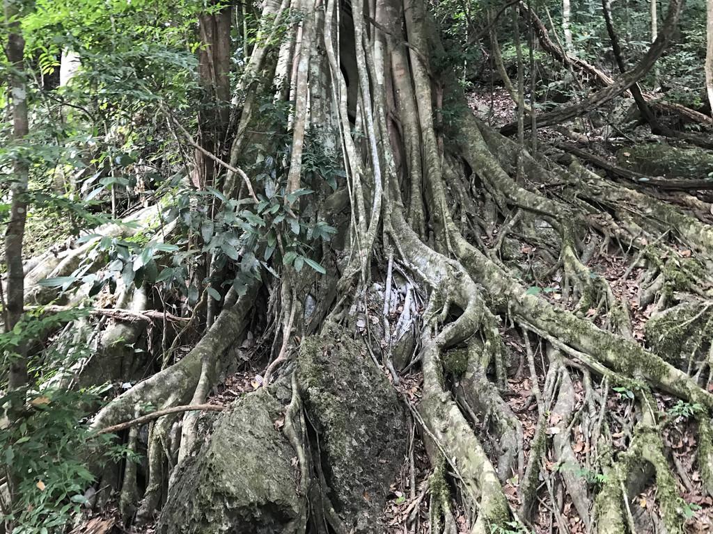 西双版纳,古代傣语为勐巴拉那西,意思是理想而神奇的乐土,以神奇的热带雨林自然景观和少数民族风情而闻名于世。 在这里,能参观神奇的热带雨林景观,近距离观赏可爱的动物表演,还能体验和观看热情的少数民族舞蹈,是一个老少皆宜的旅游游玩地。 一、交通: 成都到西双版纳自驾约1400公里,耗时20小时,考虑到父母同行,选择了快捷舒适的直飞。 ***温馨提示***: 成都到西双版纳只有一大早有两趟直飞,机场柜台在航班起飞前45分钟停止办票。所以,一定要安排好时间,最好提前一天在网上值好机,以免耽误行程。 二、住宿