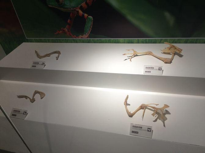 只看骨骼的话,你能猜出它们的名字吗?