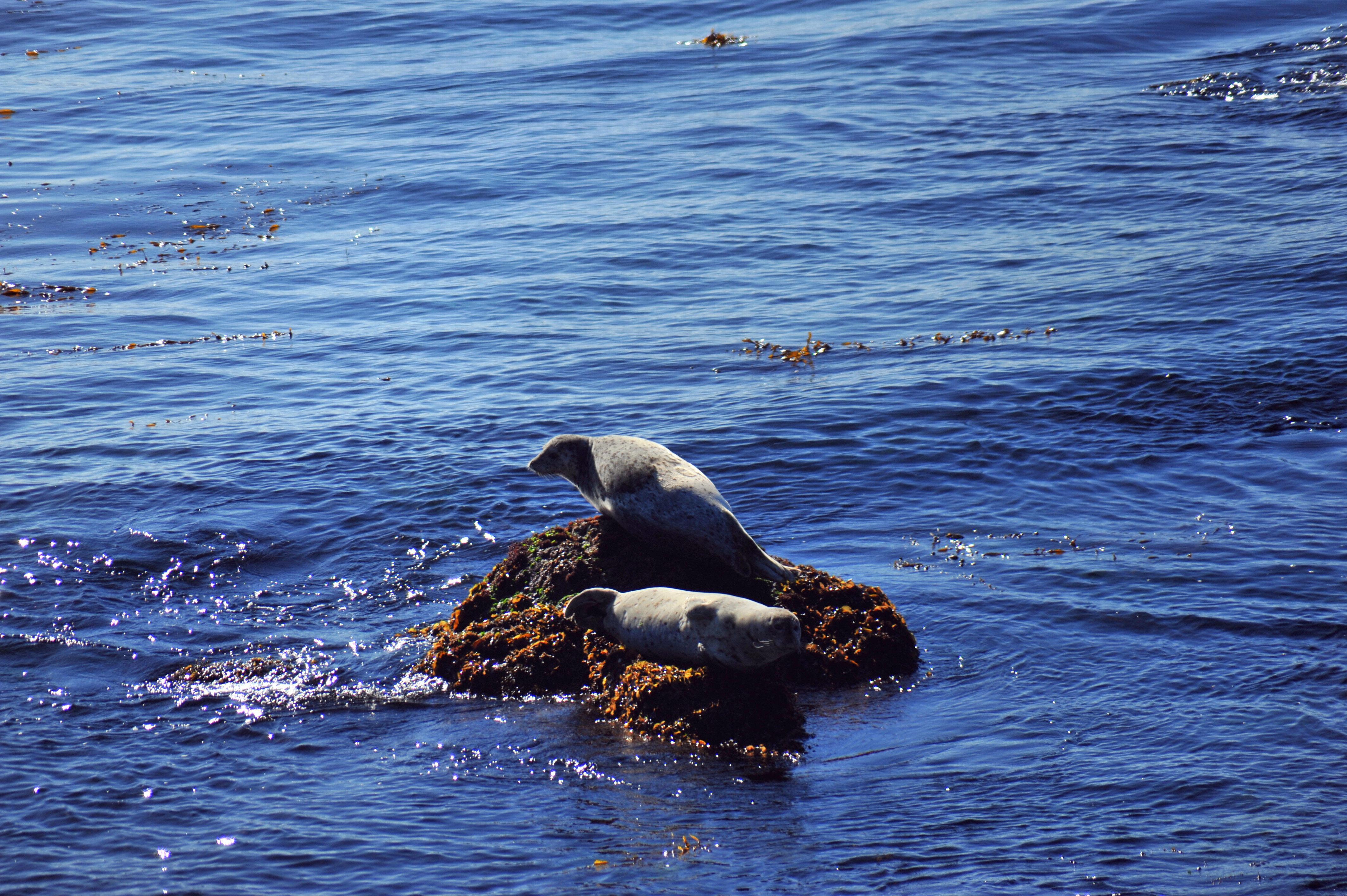 壁纸 动物 鲸鱼 4256_2832