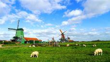 荷兰-Calvin在路上