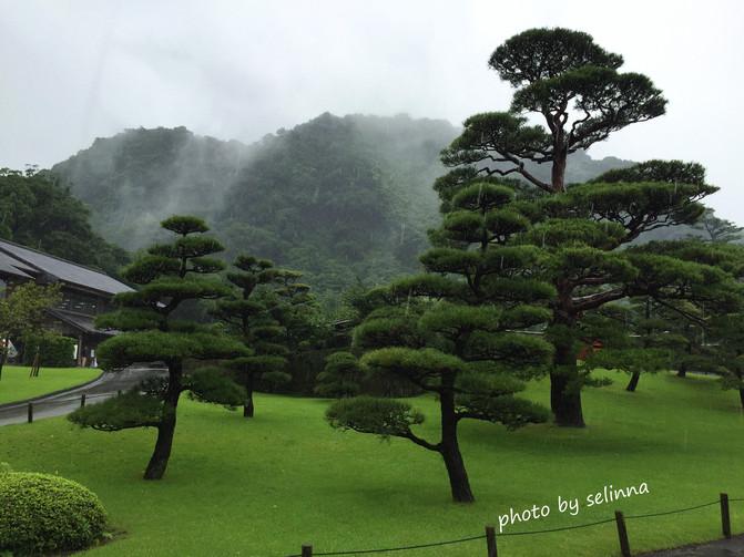 修剪的非常漂亮的松树,大雨天还感觉这么灵气,干净.