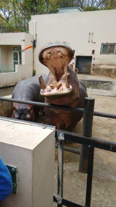 【携程攻略】温州温州动物园图片
