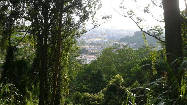 蕉石岭森林公园门票,增城蕉石岭森林公园攻略/地址