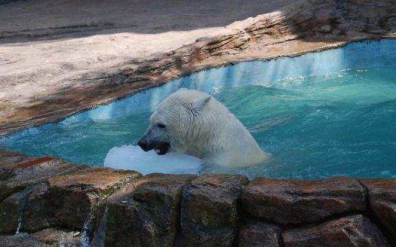 【上门接送 铁定成团】大连森林动物园+海上看大连一日游