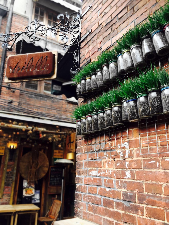 玻璃瓶中的小草挂在了墙面