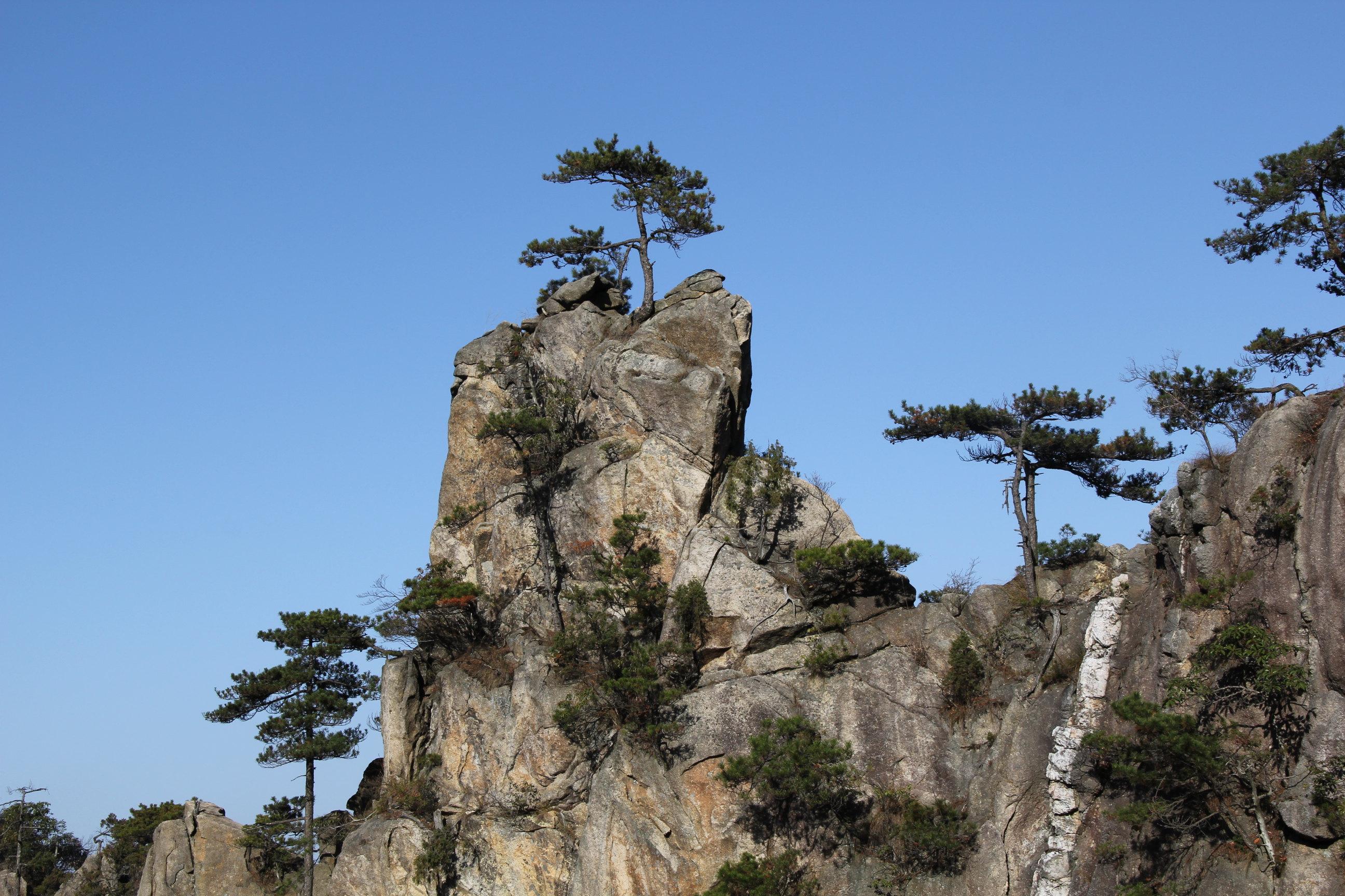 峭壁上的松树,挺拔茂盛