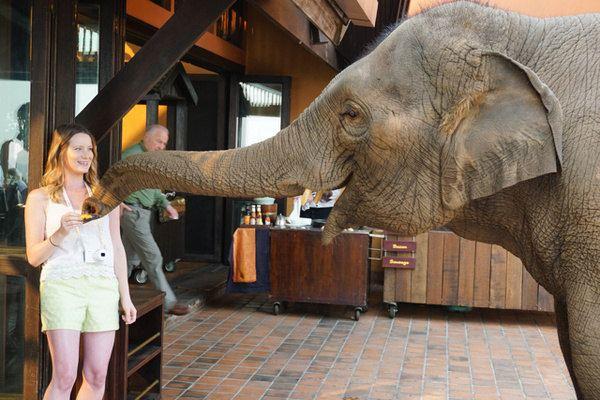 大象营安纳塔拉的对面是鸦片博物馆,这差不多是泰国最好的博物馆之一。当年西方人引罂粟种植进入金三角,一度让这里混乱不堪。今天,泰国的毒品种植在国王普必篷的带领下已经铲除殆尽,而缅甸和老挝的种植更有越来越甚的趋势。安纳塔拉可以安排客人缅甸的大其力镇半日游,这里也是毒品的老巢,缺电少食,街边满是乞丐,让人愈发喜欢上泰国。赌博在泰国是非法的,但在金三角的缅甸和老挝却各有一座规模庞大的赌场,后者还是中国人经营的,里面充满了中国风。无一例外,这两座赌场都在赚中国人和泰国人的钱。