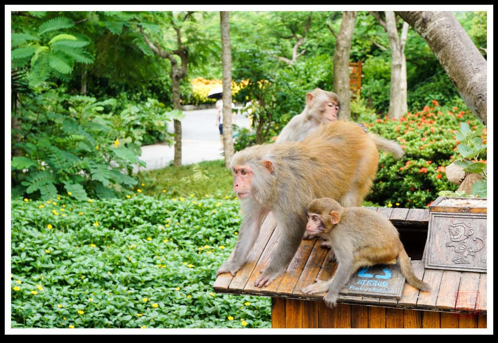 园区内有耍猴,动物明星表演等动物园必备表演项目供观看.