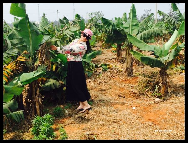 岛上矮矮的香蕉树