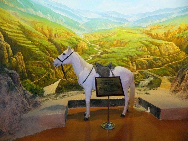 马被饲养在北京动物园