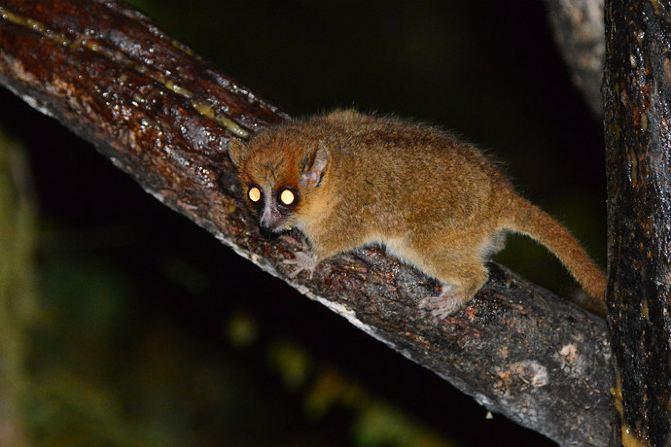 【马达加斯加】哈努马法纳热带雨林猎奇(图组/52p)