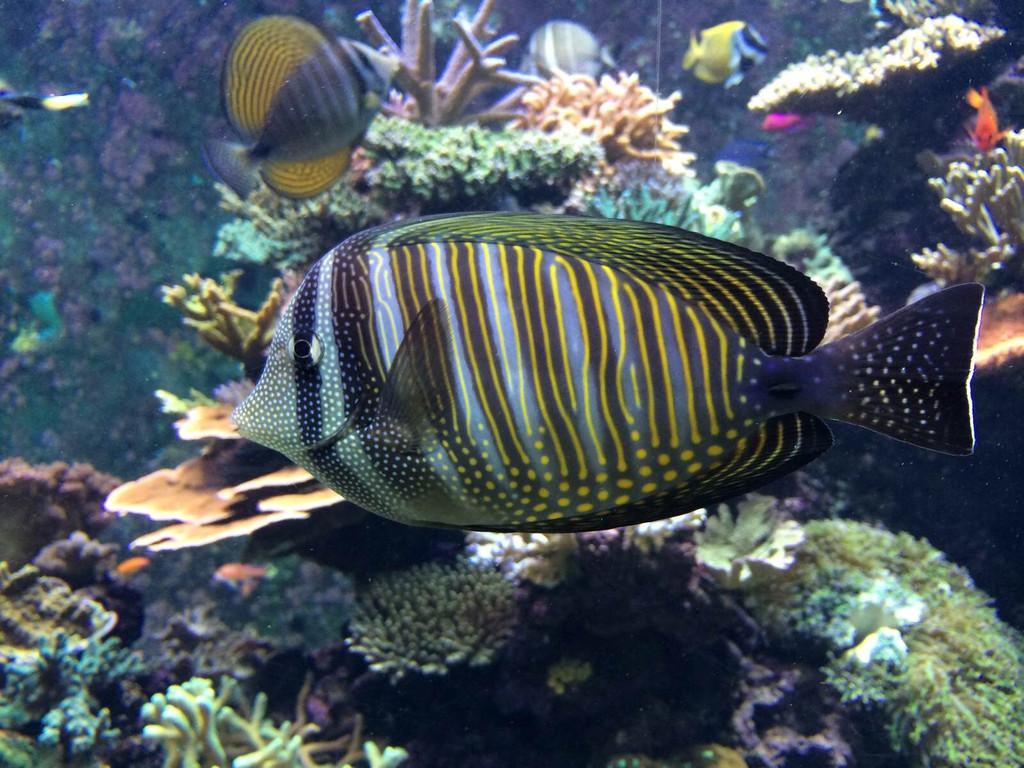 圣淘沙名胜世界海洋生物园
