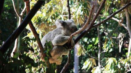 可伦宾野生动物保护区门票