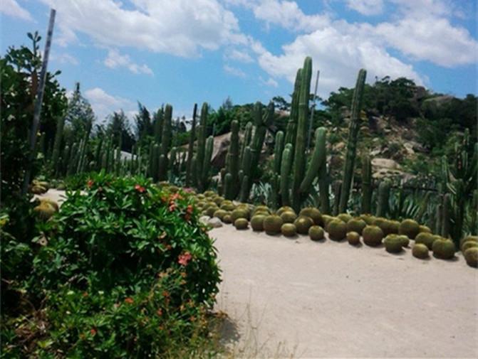 植物園也叫萬石植物園,景點超大,占地面積足.景色優美,分區明確!圖片