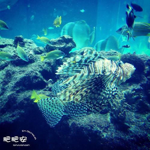壁纸 海底 海底世界 海洋馆 水族馆 桌面 500_500