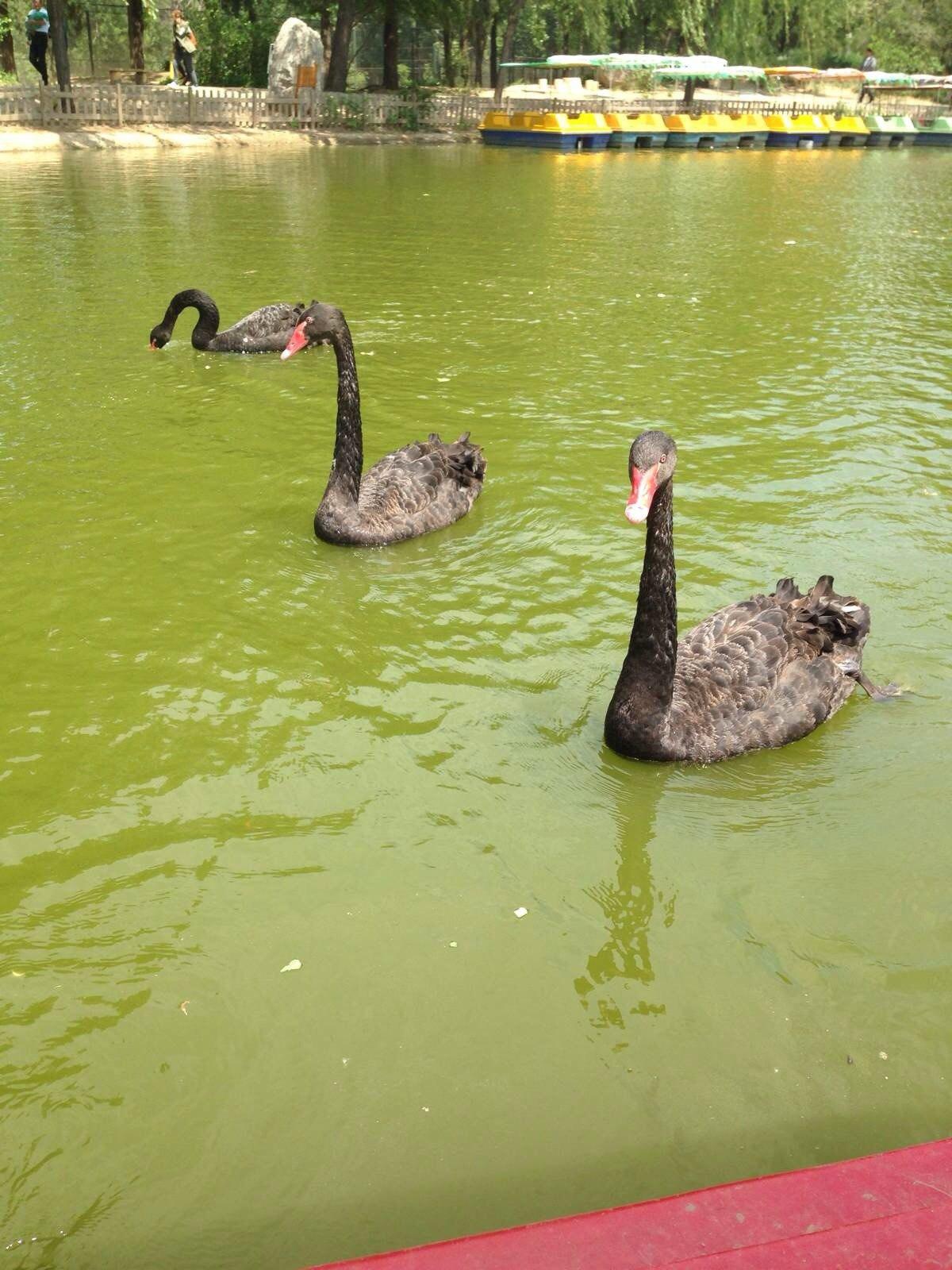 北京野生动物园记~五一的动物们