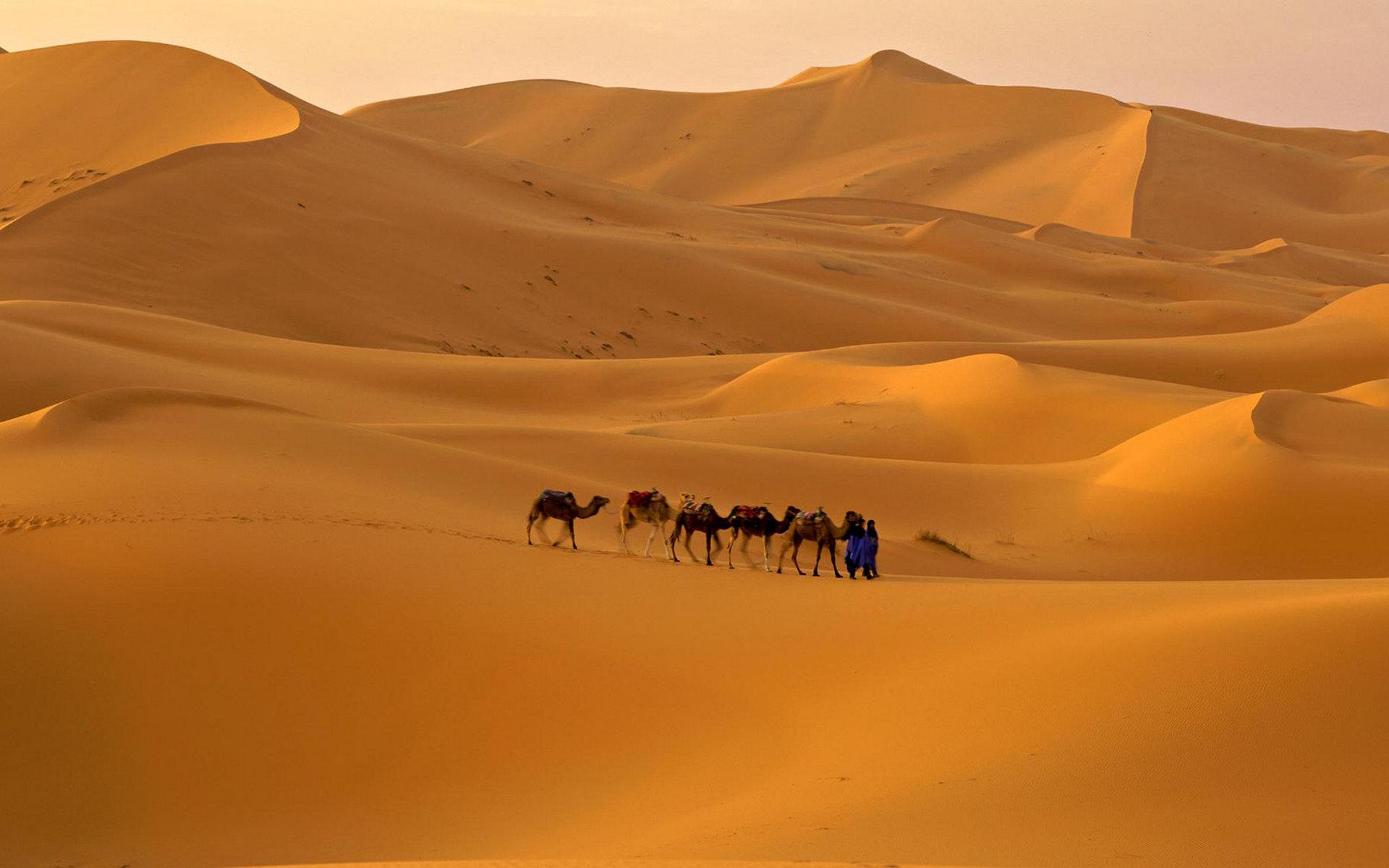 沙漠的简笔画 彩色