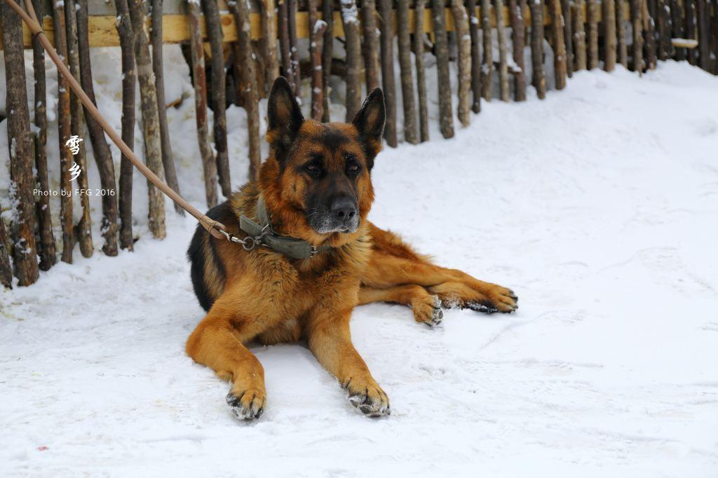 什么动物不怕冰雪