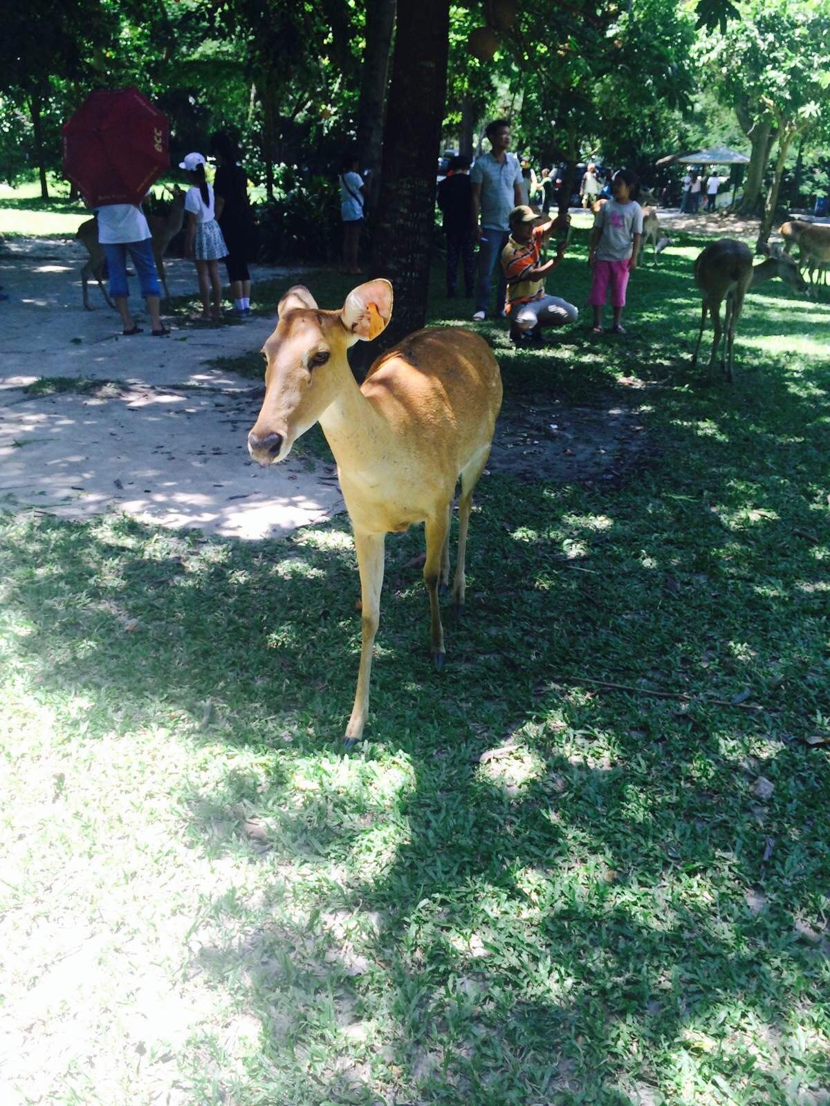 绿山国家动物园 绿山国家动物园