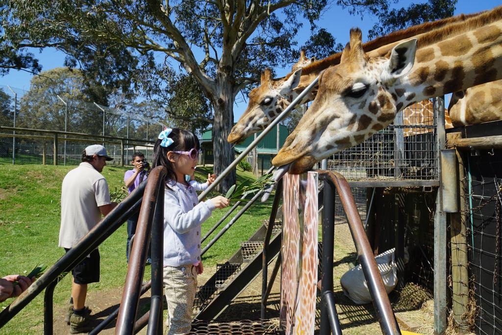 老外的动物园,互动环节都做的很不错.