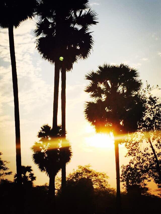 吴哥寺藏书阁旁边的椰子树,正好赶上夕阳