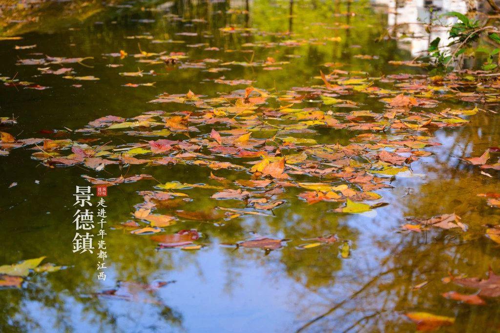 随风飘落的叶子,一片又一片的落在水面上,然后再慢慢的沉浸到水里