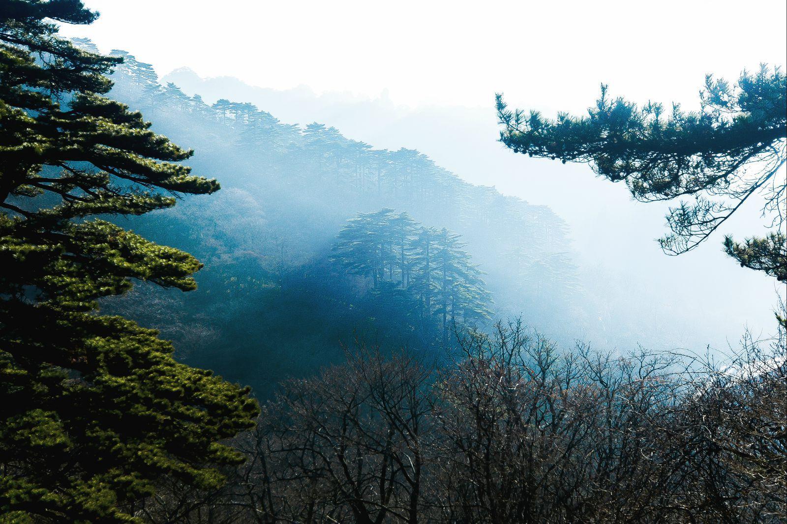 不得不说黄山的松树,挺拔