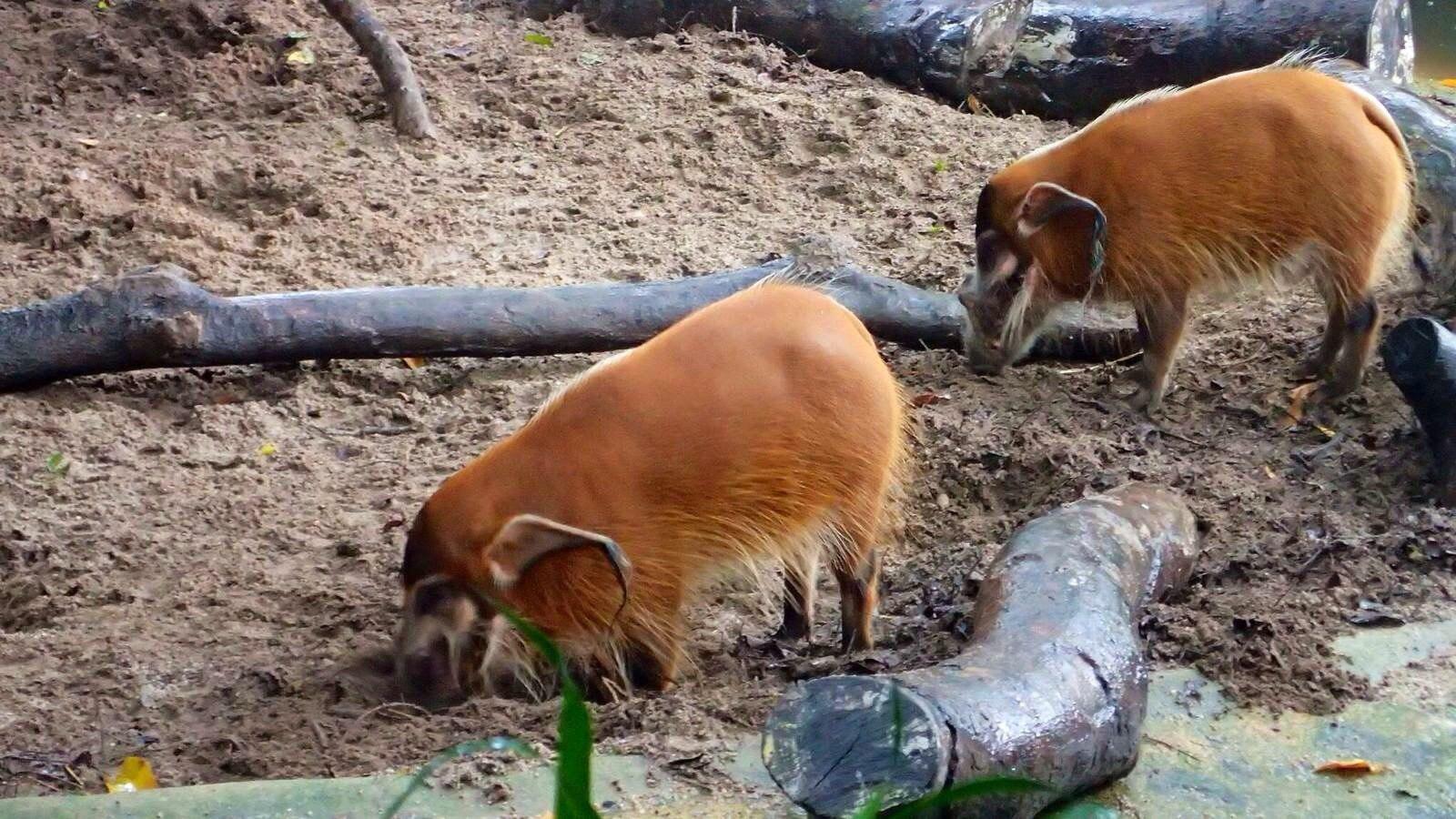 被誉为全世界最有特色的动物园之一.完全没有用栏杆哦!