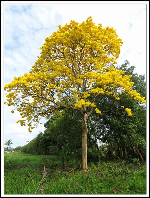 一棵树的囹�a_一棵树的风景