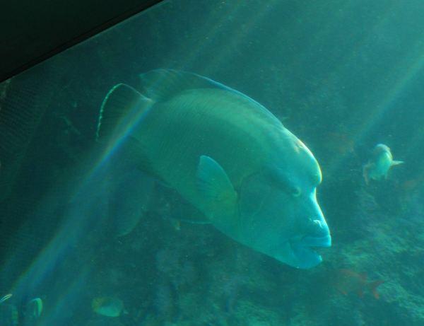 海底十大危险动物