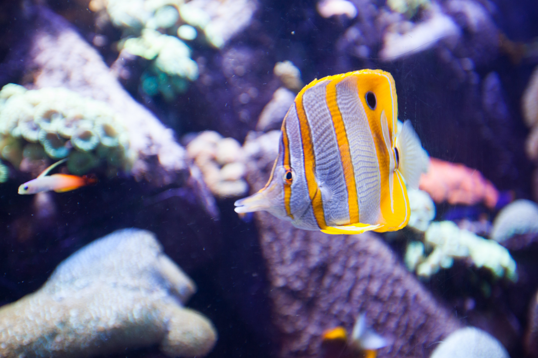 失落的空間水族館  The Lost Chambers Aquarium   -2