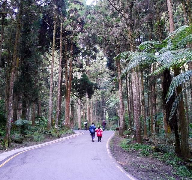 摄于溪头自然教育园区  溪头国家森林公园,最吸引人的莫过于森林植物