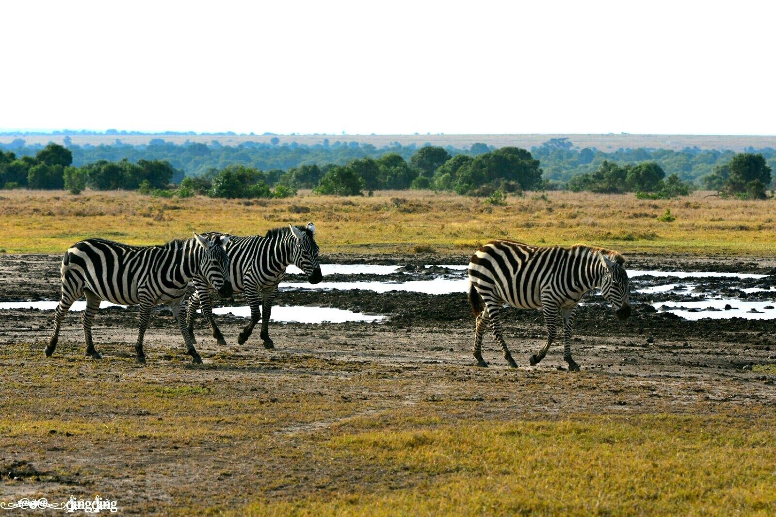 初探东非之小众的私人保护区