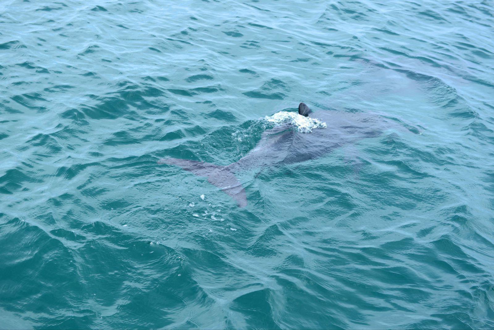 白色海豚的风景图片