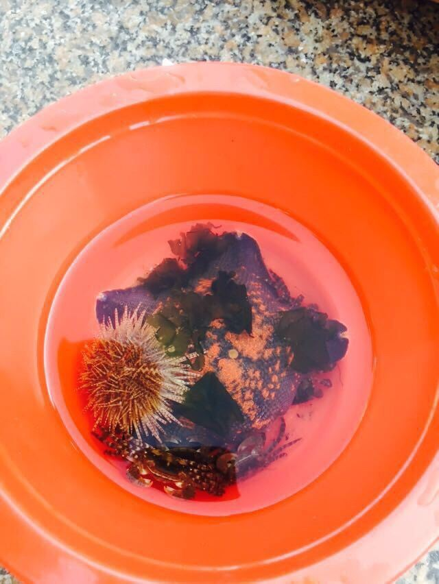海星 海胆 小螃蟹