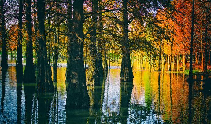 经绿化署同志介绍,这片杉树林,最早种植于上世纪的60年代,原有100多