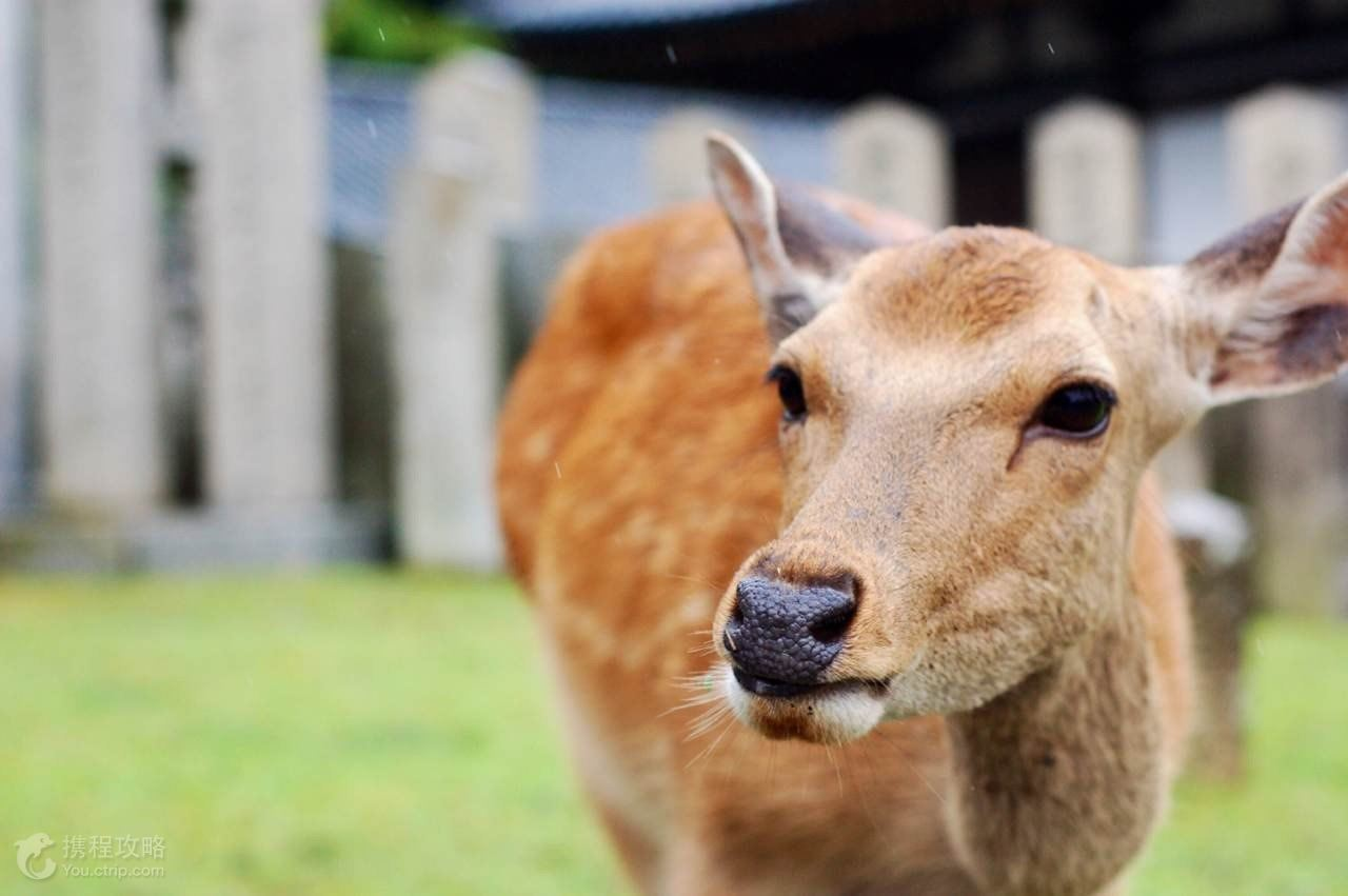 动物界唯美亲子图片