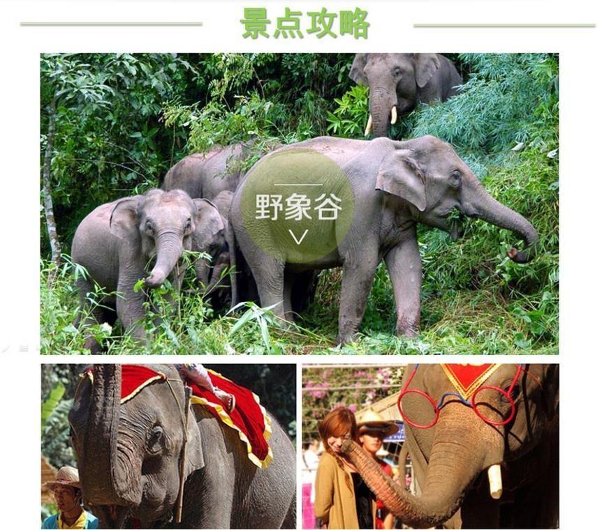 西双版纳木雕大象一般是啥木头