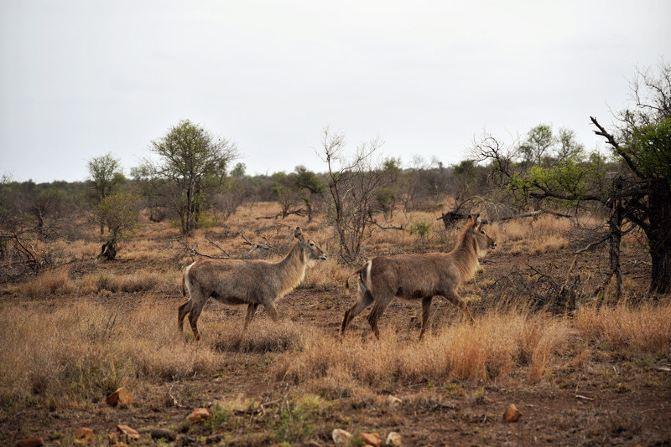 南非野生动物保护区