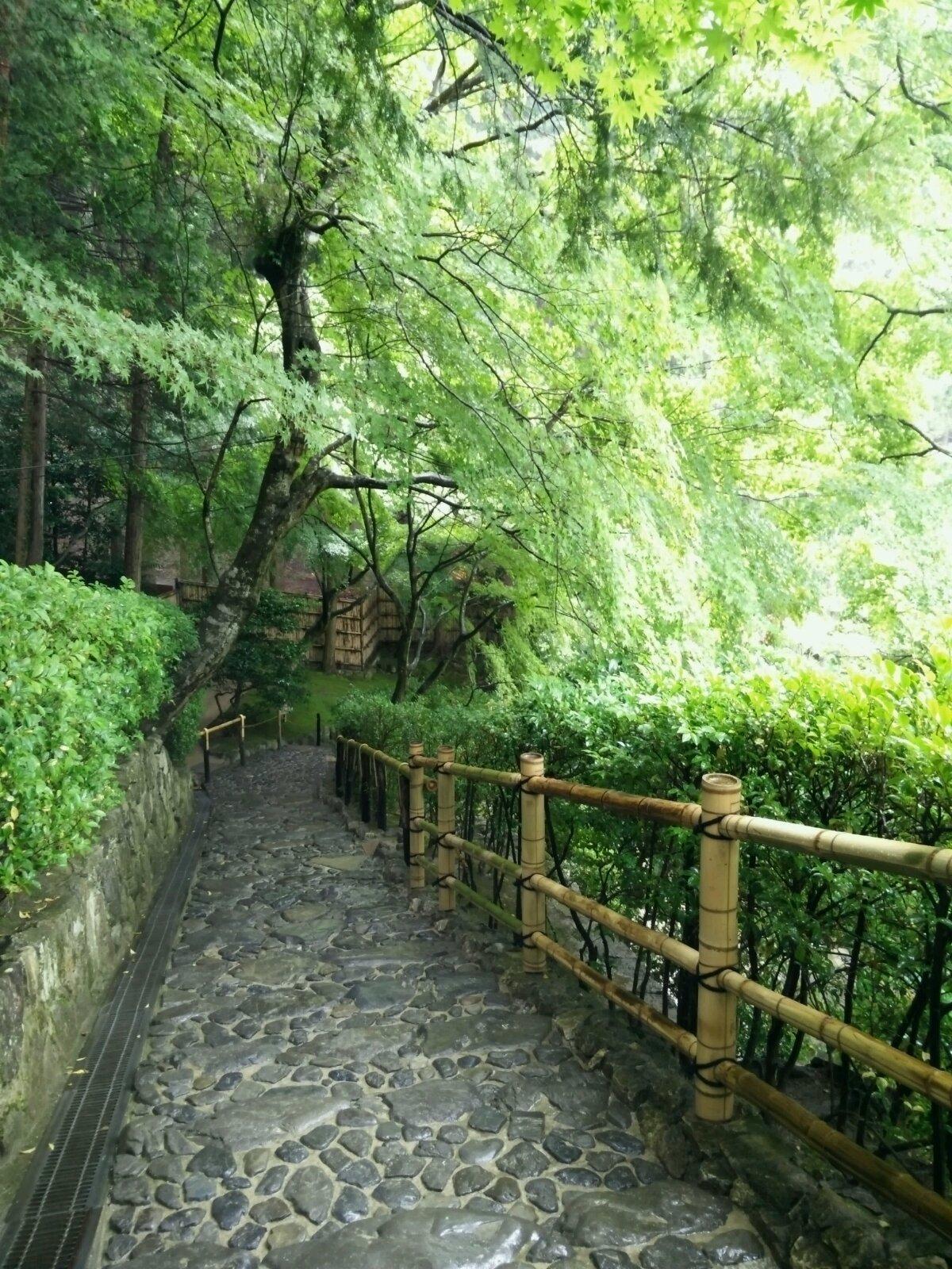 下鸭神社威严大气,还有十二生肖守护神,参天古树,而且这是当日唯一